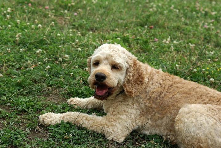 Dog training Mississauga