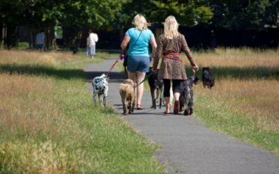 Group Dog Walks Are Great Fun