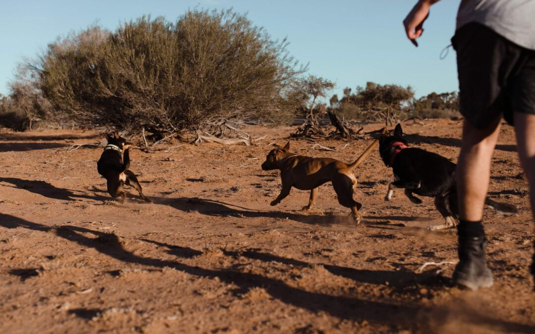 What To Expect With Group Dog Walking?