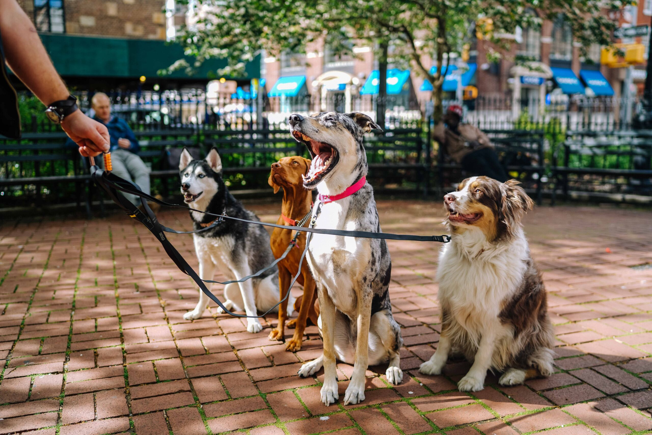 Self-Care Tips for Pet Sitters and Dog Walkers This Year