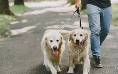 Safety Reminders for Pet Sitters and Dog Walkers