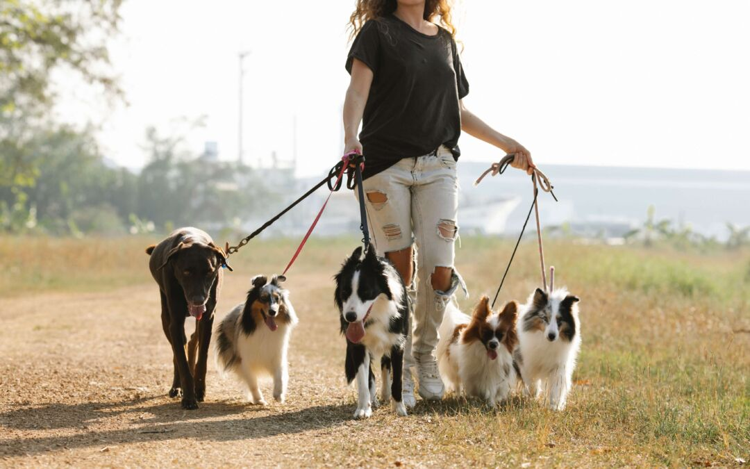 How to Choose Perfect Dog  Walker Sitters